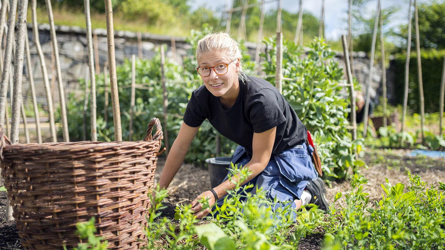 Kvinnlig trädgårdsarbetare rensar ogräs